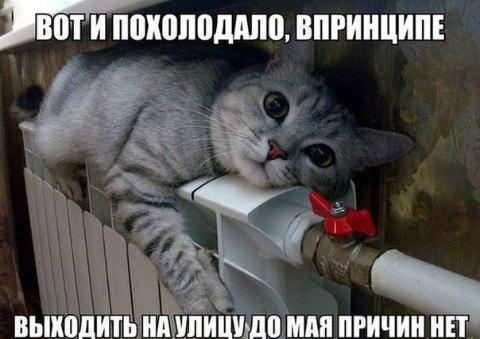 http://cs625526.vk.me/v625526186/57621/4HoK7HLuoRo.jpg