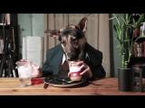 Приколы, где люди заразительно ржут. Видео про смешных собак и людей. Самые смешные видео приколы