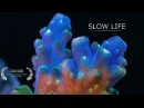 BioQuest Studios - Slow Life