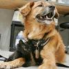 Pet Control  все для безопасности ваших животных