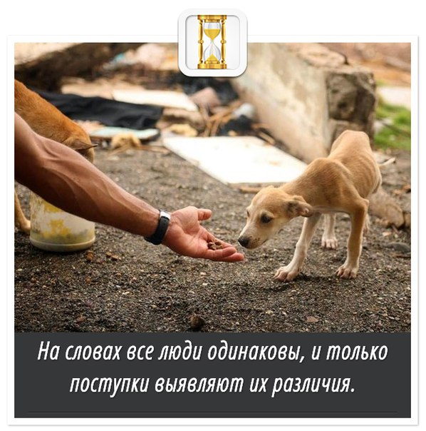 https://pp.vk.me/c625527/v625527564/49c8c/XVu9UqjFcbI.jpg