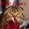Питомник шотландских кошек VOLGA DAWN'S