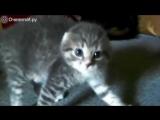 Самые милые и смешные котики