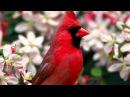 Слайд-Шоу Красивые экзотические цветы