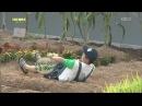 보라, 소유 출연예고 - 인간의 조건, 9월 18일 밤 10시 50분 방송