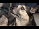 Собаки Джуманджи Животные в мегаполисе