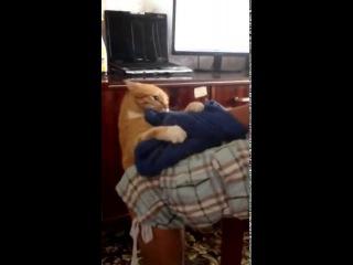 Когда кот кричит: