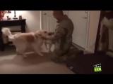 Собаки встречают своих хозяев после долгой разлуки.