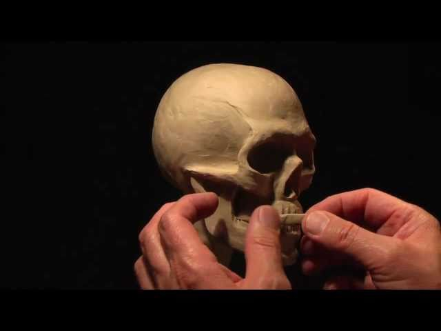 Sculpting a Human Skull in Clay_part-2