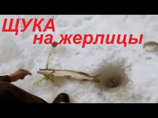Ловля щуки зимой на жерлицы для начинающих