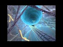 Inner Life of the Cell Full Version Narrated