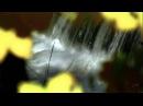 Ф Шопен - F Chopin - Nocturne Op 27 No 1 - Осень... autumn