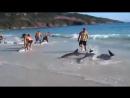 Дельфины и люди.