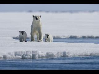 Арктика – суровая, но ранимая. Секреты освоения