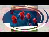 Самая чарующая музыка - Раймонд Паулс