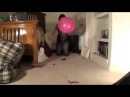 NEW:Alissinflatables Blue and blue blow to pop While riding a 24 inch balloon Hot Lesbian