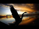 Раненая птица / Дарина Кочанжи