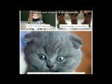 «С моей стены» под музыку Румян - Мой кот любит хип-хоп вася ???. Picrolla