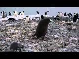 Прикол про пингвинов  Когда у вас просто был плохой день