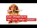 Чистка зубов у собак в домашних условиях или как самому чистить зубы собаке?