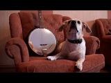 Фрося – собака-вегетарианец