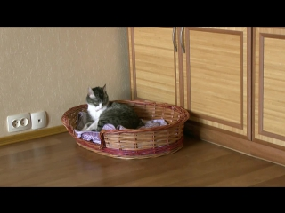 Один дома или что делает кошка с 8 до 13.