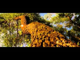 Сокрытое в листве