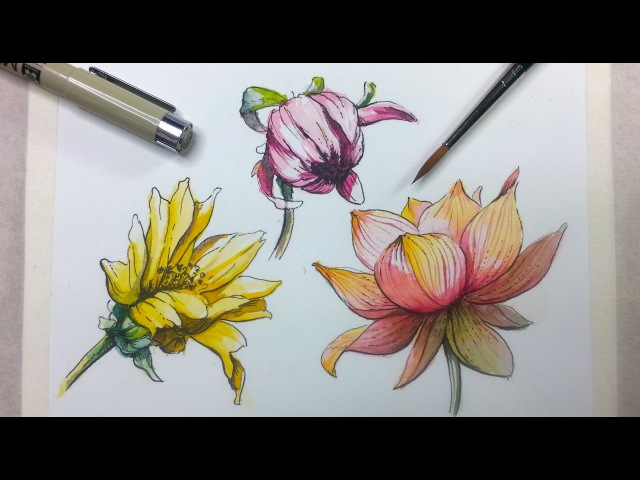 How to Draw Paint Flowers with Ink and Watercolor Part 2