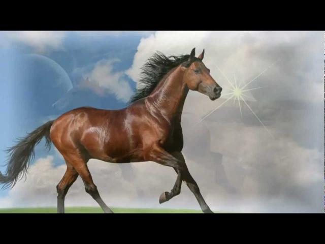 Concierto De Aranjuez - James Last - Лучшие скакуны в мире