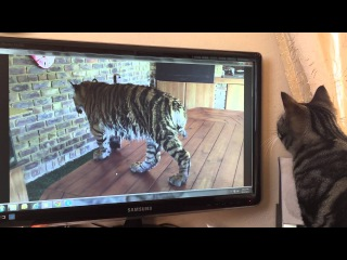 This cat watches the videos and only load the good ones !