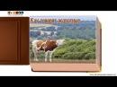 Как говорят животные звуки животных - развивающее видео для детей 1