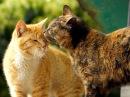 Наши любимые и прикольные котики Прикольное видео про кошек Приколы с кошками Funny cats
