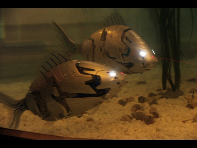 Robotic fish in South Korea - very advanced, very strong, mostly autonomous