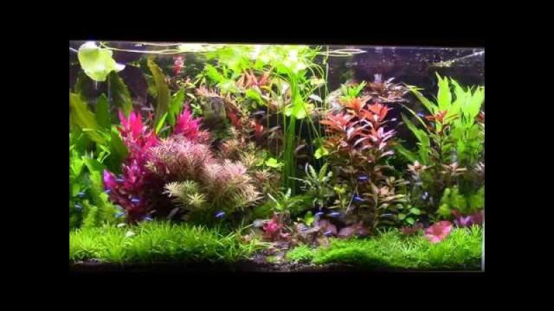 Aquarium planté de
