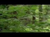 Water  - BRIAN CRAIN (Relaxing music)