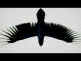 Fat Freddy's Drop Blackbird (Official Video)