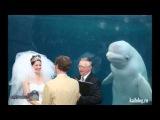 Приколы на русских свадьбах
