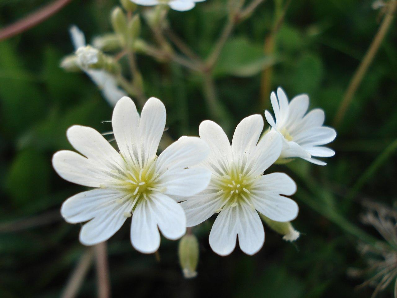 И у цветов весна)) PQBISwUUS7A