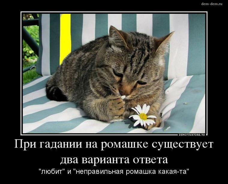 http://cs625619.vk.me/v625619968/318c5/CSfzwb_a0Zg.jpg