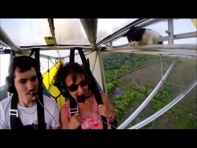 Cat woke up at flying a hang-glider - Кот проснулся на летающем дельтаплане