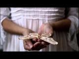 Oystein Sevag - A Butterfly's Dream - with Emmanuelle Brisson Art