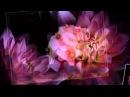 Fausto Papetti Маленький цветок Чарующие звуки саксофона