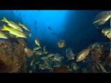 BBC Мир природы Морская черепаха