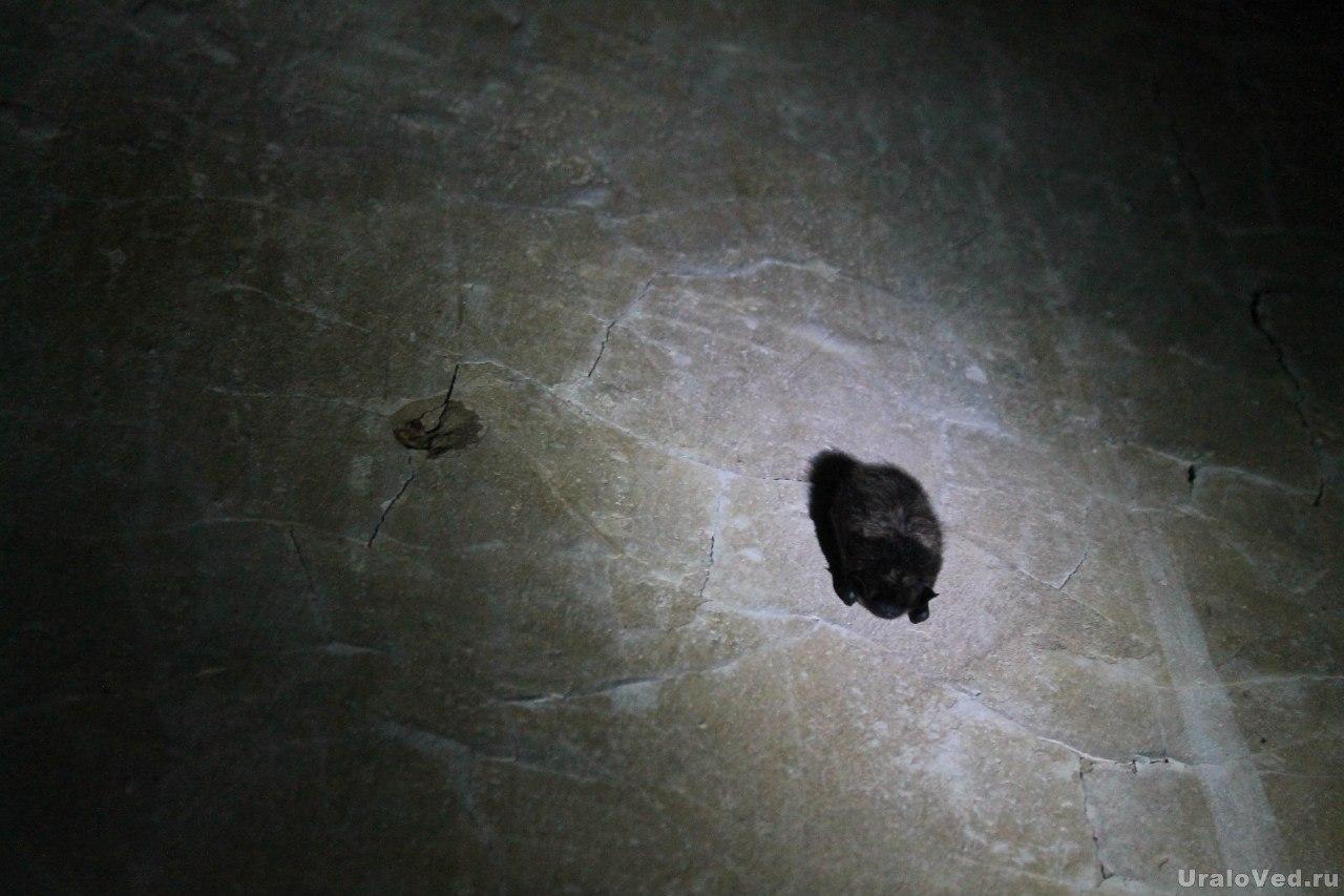 Летучая мышь в бункере