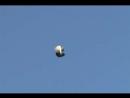 торцовый голубь илмана зелемханова