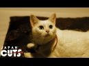 Neko ~Samurai ♥ Cat~ trailer (English subtitles) JAPAN CUTS 2014