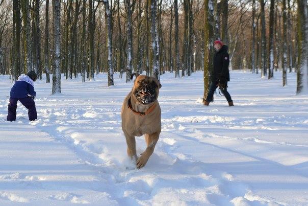Как перевоспитать собаку: rк вопросу о нежелательном поведении P1zlSnXbdEs