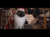 Andy Davis - Single Christmas Official Music Video - feat. Doug The Pug