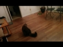 Кот поймал летучую мышь
