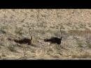 Animal planet Дикие животные Самые большие